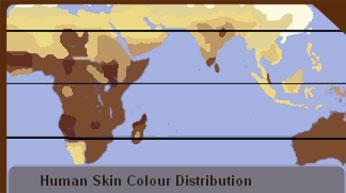 Skin color distribution
